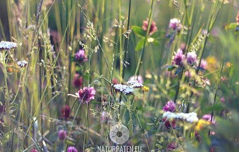 natürliche Blühstreifen