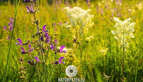 Blühende Artenvielfalt in mehrjähriger Blühwiese