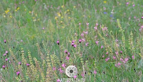 Bluehwiesen helfen dem Artenschutz