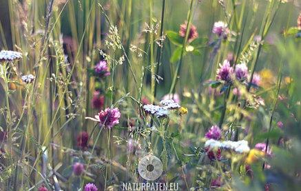 Artenvielfalt in Bluehwiese