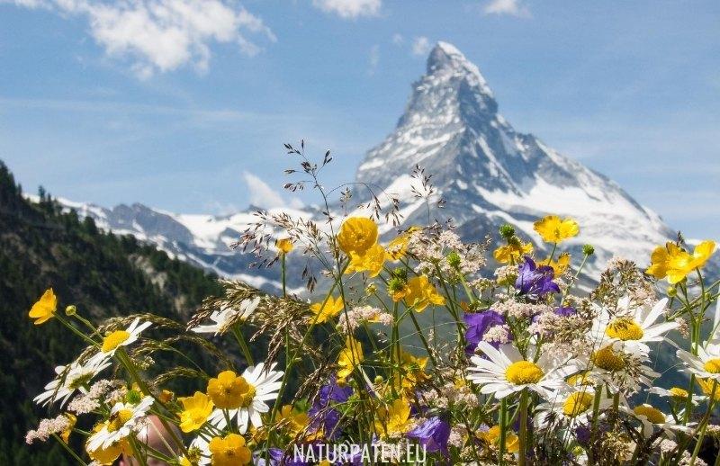 Naturpaten Vision Mission