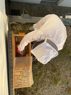 Ausrüstung um Bienen im Wohngebiet zu halten