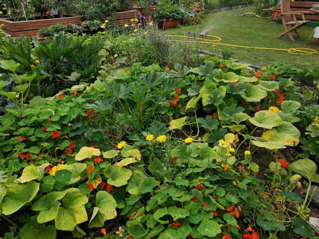 Gemüsebeet im Permagarten