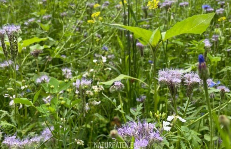 Tipps zum Anlegen der Blühwiese