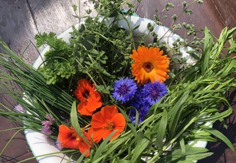 Gemüse anbauen im eigenen Garten ist gut für die Umwelt
