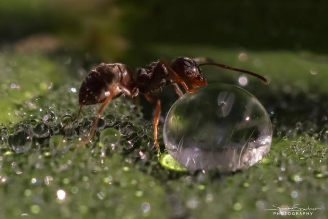 Ameise Naturfotografie Bewusstsein Makro