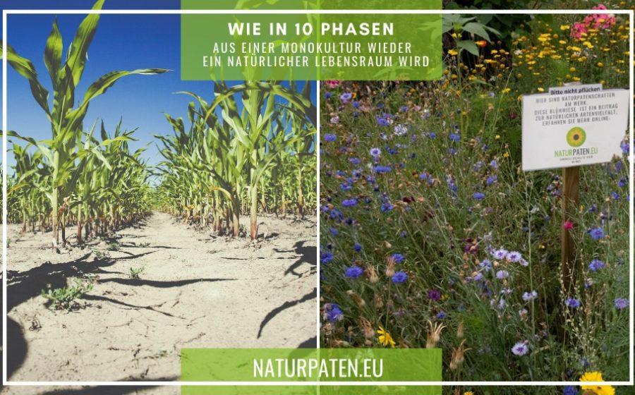 In 10 Phasen von Monokultur zur Blühwiese